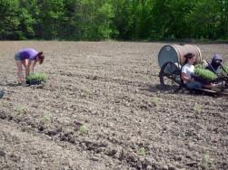 Planting at Lavender Sense, Spring 2009