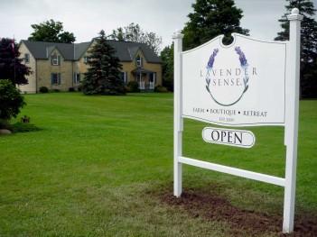 Season opening at LAVENDER SENSE, Ontario lavender farm